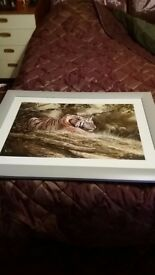 Framed photo of tiger