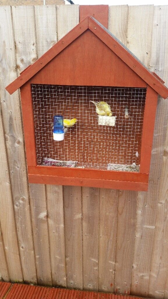 Canaries and cage