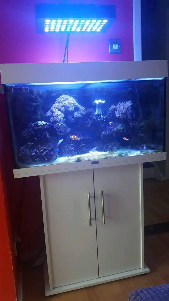 juwel rio 125 full set up marine aquarium in royston cambridgeshire gumtree. Black Bedroom Furniture Sets. Home Design Ideas