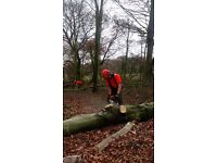 Chainsaw operatives required for on-going forestry work