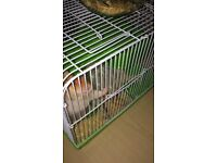 Syrian hamster male with cage