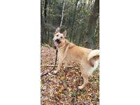 Dog breed? Please help!