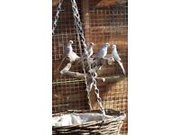 Job lot of 4 dimond doves