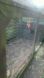 Chicken Coup Hen House Rabbit Hutch/Run