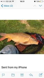 Fishing Henstead fisheries, Beccles