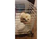 **FOR SALE** 2 ferrets 1 male 1 female, 6 months and 1 year, need gone asap!