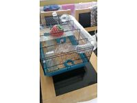DWARF HAMSTER AND FULL CAGE SET UP