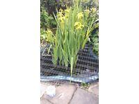 Fibre glass fish pond/filter/pump/waterfall/plants