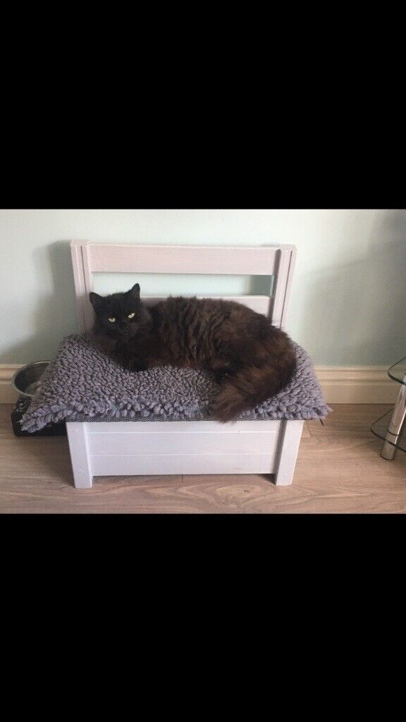 Picture of: Wooden Cat Small Dog Bed Bench In Barnsley South Yorkshire Gumtree
