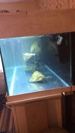 6ft fish tank solid oak stand