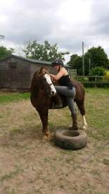 Beautiful mare for sale