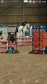 Sharer / Rider for 14hh Competition Pony