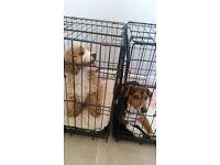 Dog Crate for medium size dog