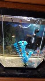 Young guppies for sale