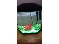 Fish and Tank