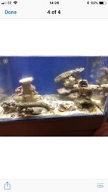 Live rocks for marine tank various sizes