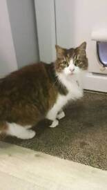 Good home wanted for lovely female tabby