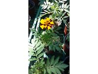 Plants & flowers for sale