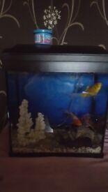 Fish yank with 2 fish