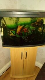 2ft fish tank with extras