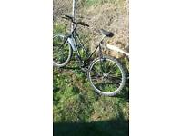 Bike leadies adult,s for sale can delivari