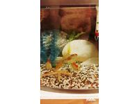 28L Fish tank with fish