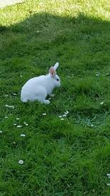 2 rabbits in need of loving new homes