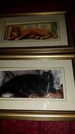 Set Of 4 Framed Cat Pictures