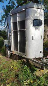 Ifor Williams 505 horse trailer/ box