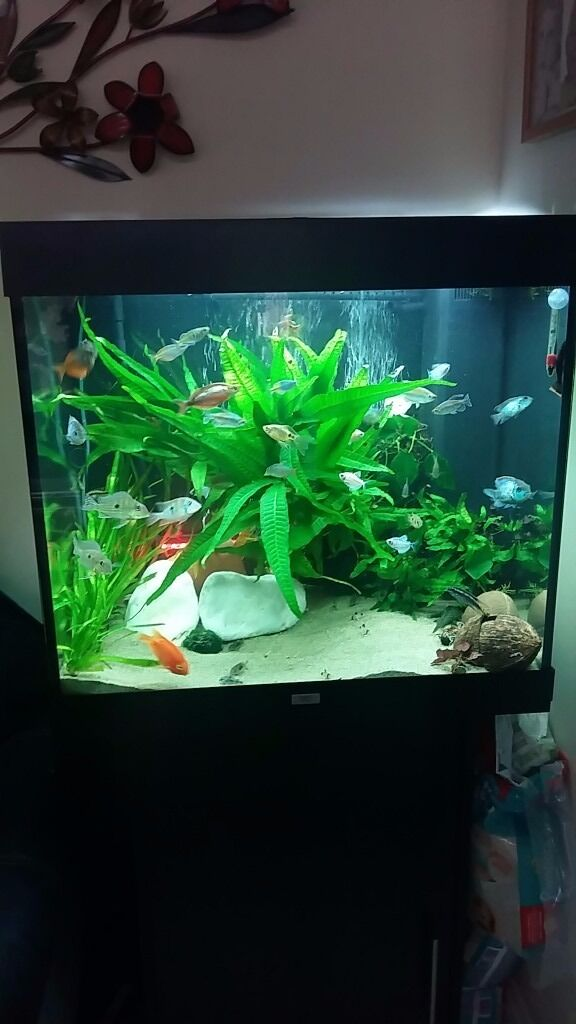juwel lido 200 fish tank in rogerstone newport gumtree. Black Bedroom Furniture Sets. Home Design Ideas