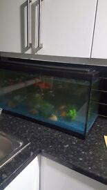 A large complete Aquarium for urgent sale