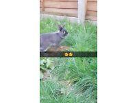 Stunning male rabbits