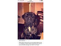 Missing Kya. Missing pet, seen at teatime. REWARD FOR SAFE RETURN