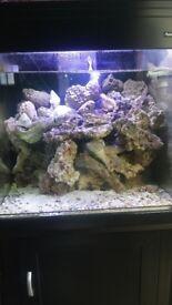 Fish tank marine aqua one