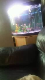 12 Fish and tank