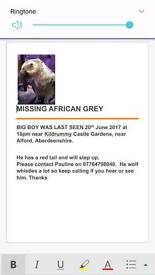 Missing African Grey