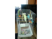 2 BUDGIES AND CAGE