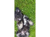 4 puppys