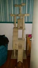 Very tall cat tree