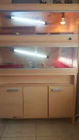 4 bearded dragons and full set-up including uv bulbs