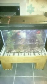 2ft fish tank with 3 hot water fish, pump filter and light