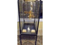 Large bird cage for sale can deliver locally