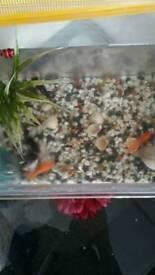 Fish Tank+4 lovely fish