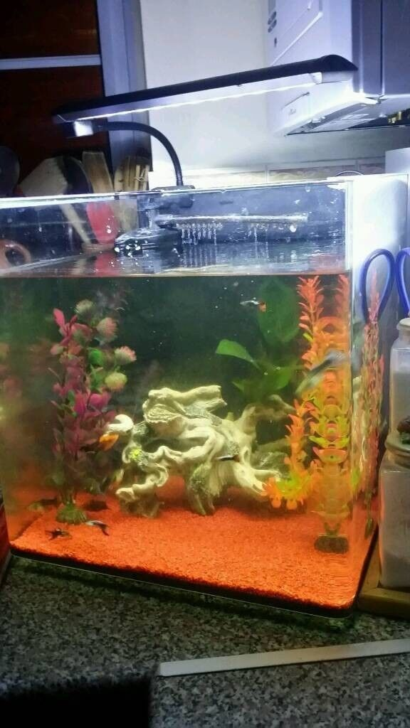 Tropical aquarium complete cost over £150 sell for £50 only 6 months old