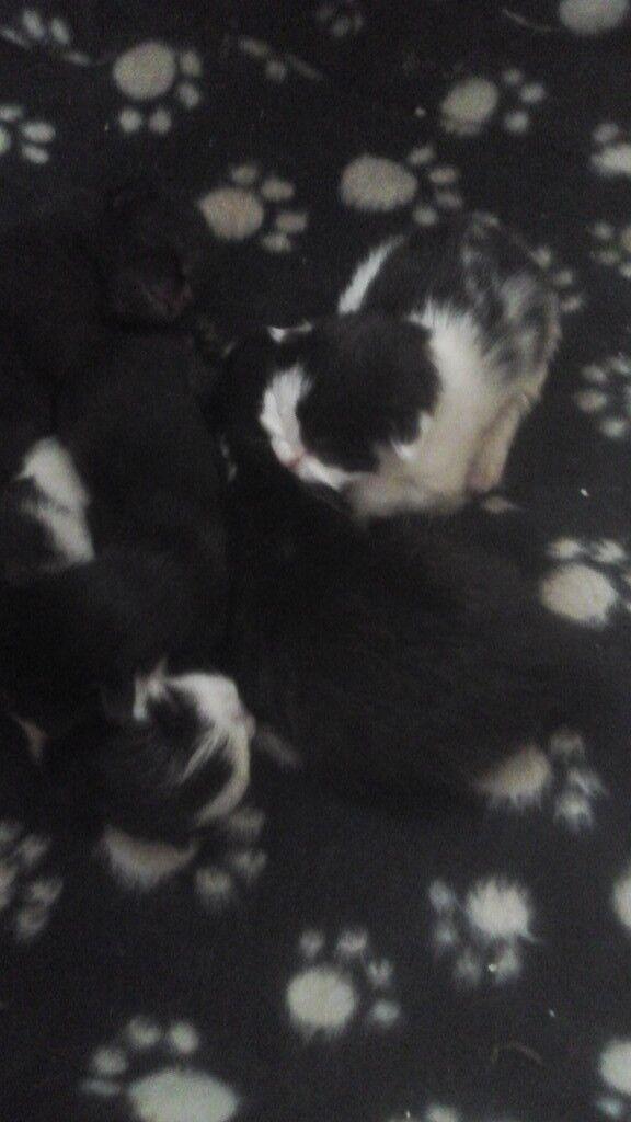 Lovely little kittens