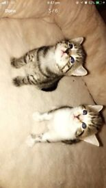 2 BEAUTIFUL KITTENS!!!