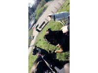 Experienced Dog Walker - Stoke Newington/Dalston/Hackney