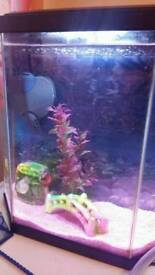 2 small platy fish and tank