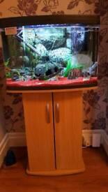 64ltr fishtank