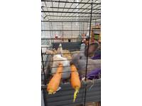 2 beautiful bunnies for rehoming